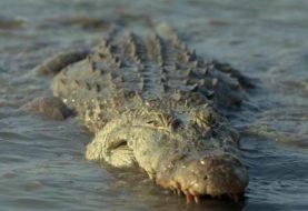 Pastor devorado por tres cocodrilos por intentar caminar sobre el agua